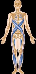 About - Anatomy TrainsAnatomy Trains