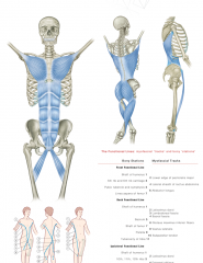 Anatomy Trains 3rd Edition Posters